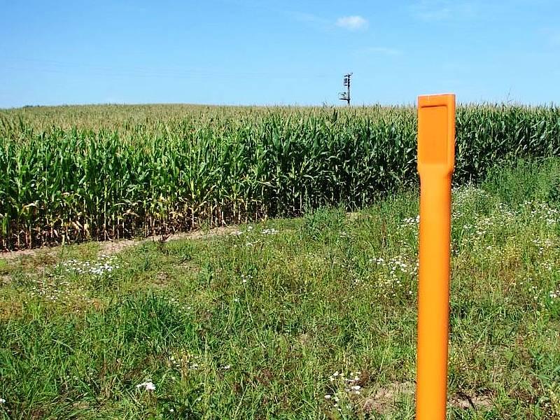 Schon im Jahr nach Beendigung der Bauarbeiten konnte wieder Mais angebaut werden.